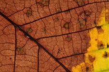 Free Autumn Leaf Royalty Free Stock Image - 16362286