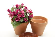 Free Flowerpots With Flower Royalty Free Stock Photos - 16363108