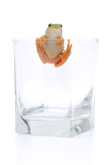 Free Frog In Glassful Stock Photography - 16363902