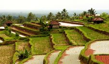 Free Rice Terraces Stock Photography - 16364392