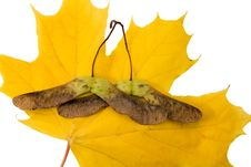 Free Autumn Stock Images - 16364704
