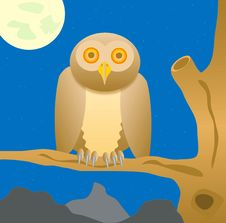 Free Owl Sits On Tree In The Night Stock Photography - 16365972