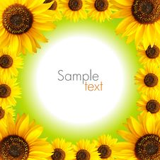 Free Sunflower Background Royalty Free Stock Photography - 16368747
