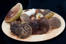 Free Mushrooms On The Black Background Stock Image - 16369041