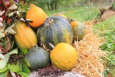 Free Colorful Pumpkins Royalty Free Stock Images - 16369119