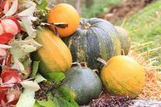 Free Colorful Pumpkins Stock Image - 16369141