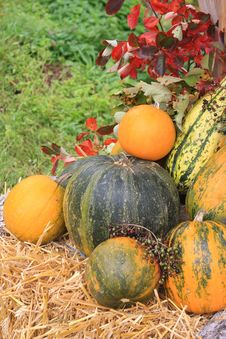 Free Colorful Pumpkins Royalty Free Stock Image - 16369166