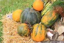 Free Colorful Pumpkins Royalty Free Stock Images - 16369179