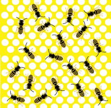 Much Bees On Honeycomb Stock Photo