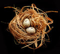 Free Quail Egg Royalty Free Stock Photography - 16373377