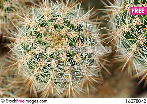 Free Cactus Stock Photography - 16378042