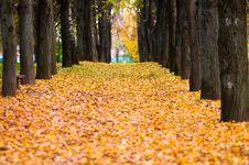 Free Autumn Avenue Royalty Free Stock Photo - 16370315