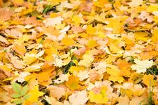 Leaf Fall  Background Stock Photos