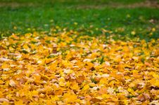 Leaf Fall  Background Stock Image
