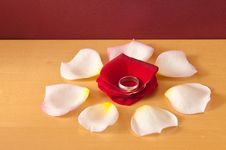 Wedding Band On Rose Petals Stock Photography
