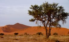 Free Namibian Sand Dunes Stock Photo - 16371850