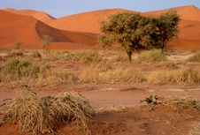 Free Namibian Sand Dunes Royalty Free Stock Photo - 16371855