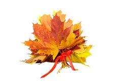 Free Bouquet Of Autumn Leaves Stock Image - 16372241