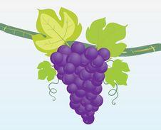 Free Grapes Royalty Free Stock Photo - 16372925