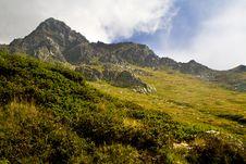 Free Mountain Pine Stock Image - 16373311
