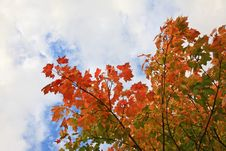 Free Beautiful Autumn In Scotland Stock Images - 16373924