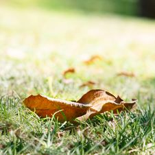 Free Autumn Leaves Royalty Free Stock Image - 16374376
