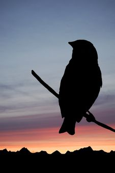 Lonely Bird At Sunset Stock Photography