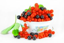 Free Black And Red Currant Stock Photography - 16375312