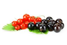 Free Black And Red Currant Royalty Free Stock Photos - 16375368