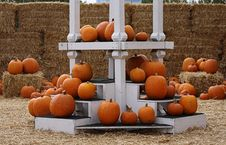 Free Seasonal Orange Pumpkins Display Stock Images - 16376124