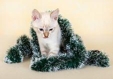 Free Thai Kitten In Christmas Tinsel. Royalty Free Stock Images - 16376479