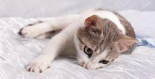 Free Cat Stock Photos - 16377043