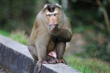 Free Monkey Stock Image - 16377151