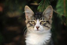 Free Cat Stock Photo - 16377440