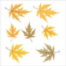 Free Yellow Autumn Leaf Set Royalty Free Stock Photography - 16377847