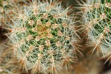 Free Cactus Stock Photography - 16378042