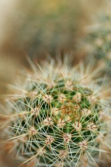 Free Cactus Stock Photography - 16378072