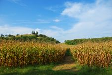 Free Cornfield By The Mantua Hills Royalty Free Stock Images - 16378599