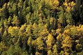 Free Autumn Foliage Royalty Free Stock Photography - 16388397