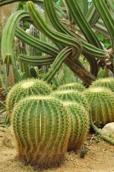 Free Cactus Stock Images - 16386054