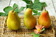 Free Pears Stock Photography - 16386352