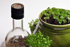 Free Fresh Herbs Royalty Free Stock Photos - 16386358