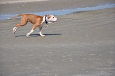 Free Dog Running On The Sand Stock Image - 16387061