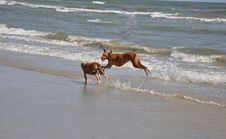 Free Dogs On The Beach Stock Photos - 16387073