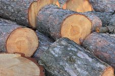 Free Pine Tree Logs Stock Images - 16389104