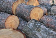 Free Pine Tree Logs Royalty Free Stock Photos - 16389118