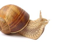 Free Isolated Snail Stock Images - 16389304