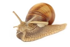 Free Isolated Snail Stock Photos - 16389313