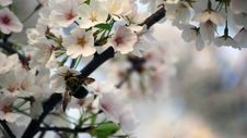 Free Bee-ing Spring Royalty Free Stock Photo - 16389585
