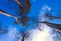 Free Tree And Sky Stock Photo - 16392200